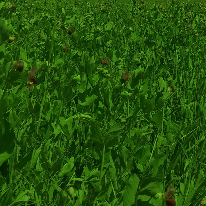 Landwirtschaft-Futter_gruen